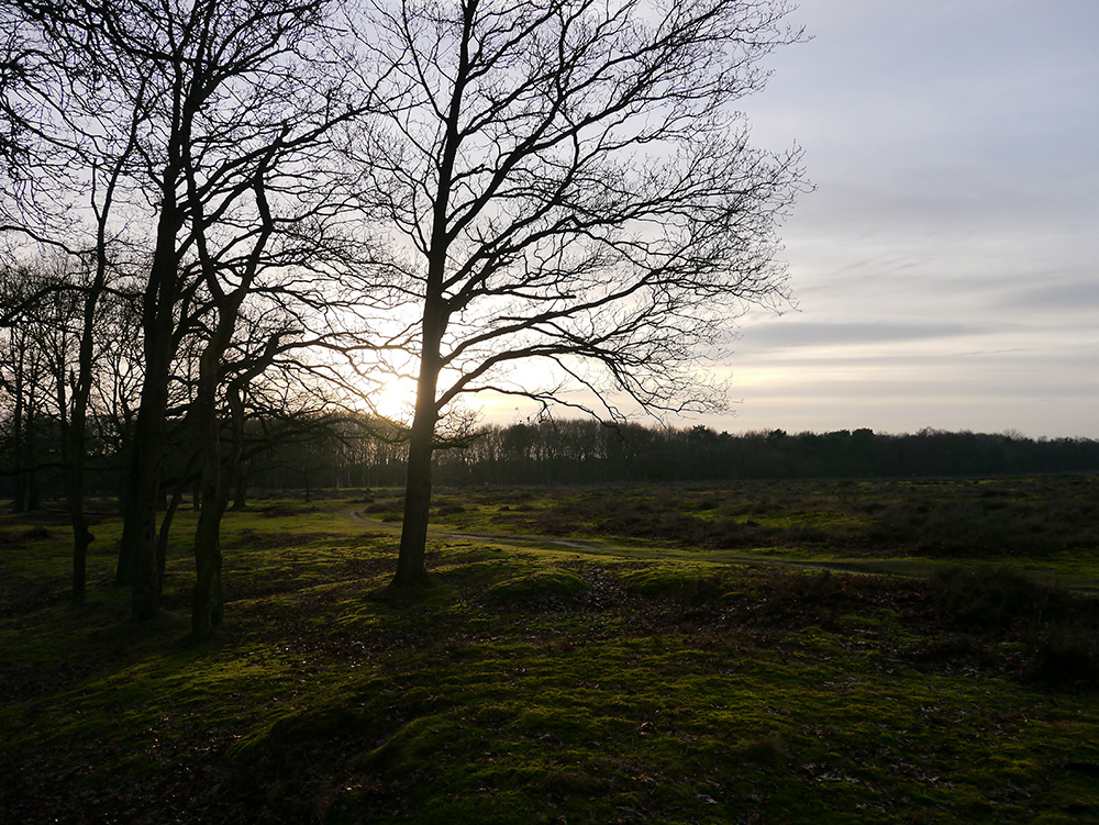 As the sun goes down over a mossy heath in Blaricum outside Amsterdam, peaks and valleys in the gently undulating ground create the highlights and shadows that have possessed Dutch landscape painters over the centuries. Credit: Nicola Brown