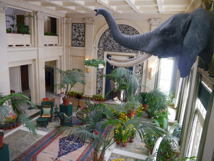 There's a real elephant head in the conservatory of the George Eastman House.