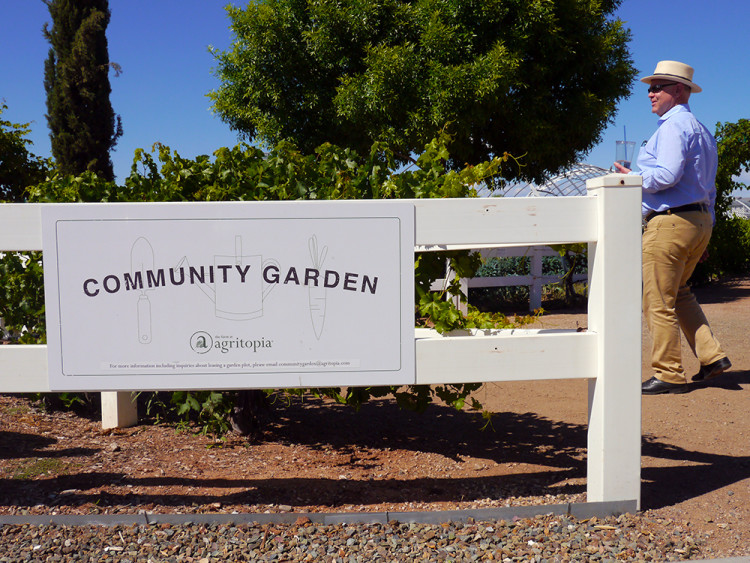 Our bubbly host Joe Johnston shows us around the lush community gardens at Agritopia