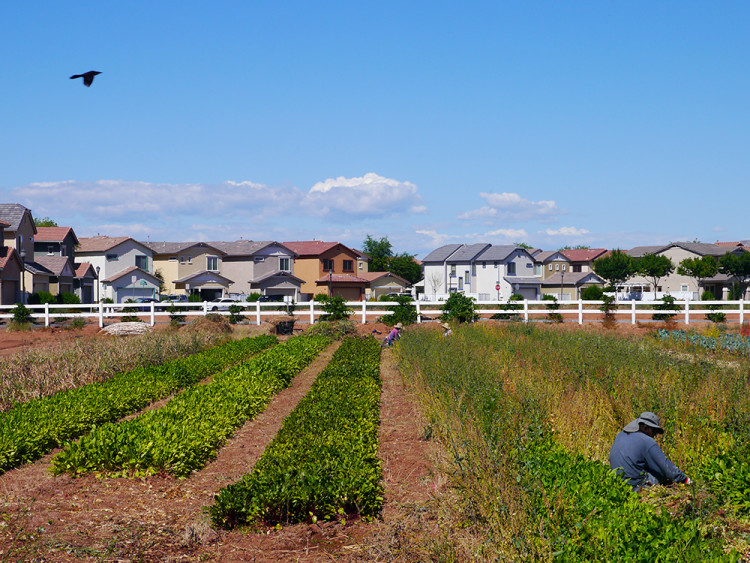 Agritopia is a planned community of crops, community gardens, residential housing and restaurants.