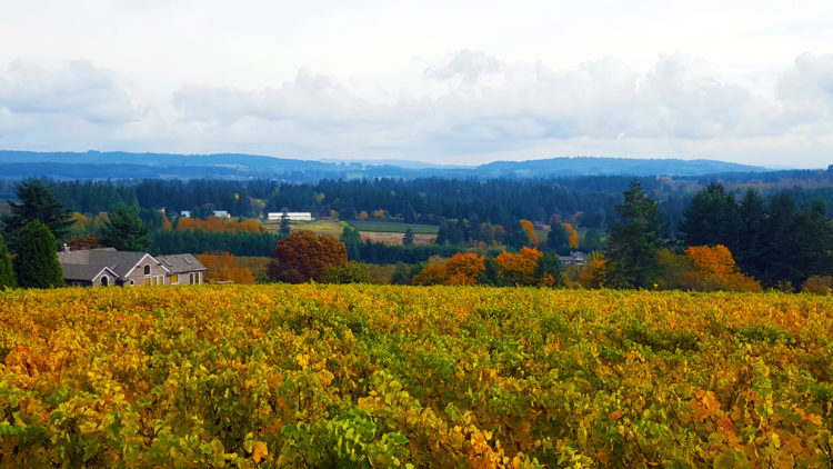 Raptor Ridge Winery Newberg Oregon